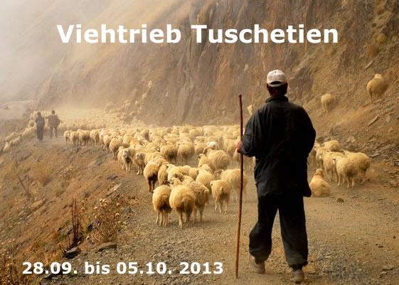 ad Viehtrieb Tuschetien 2013 561px