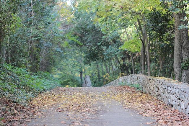 mid-November