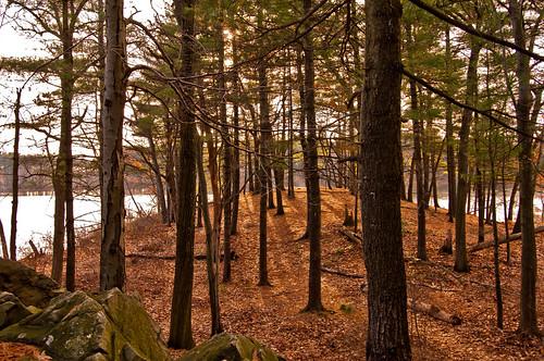 autumn trees woods massachusetts newengland spotpond