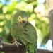 Cute speaking bird