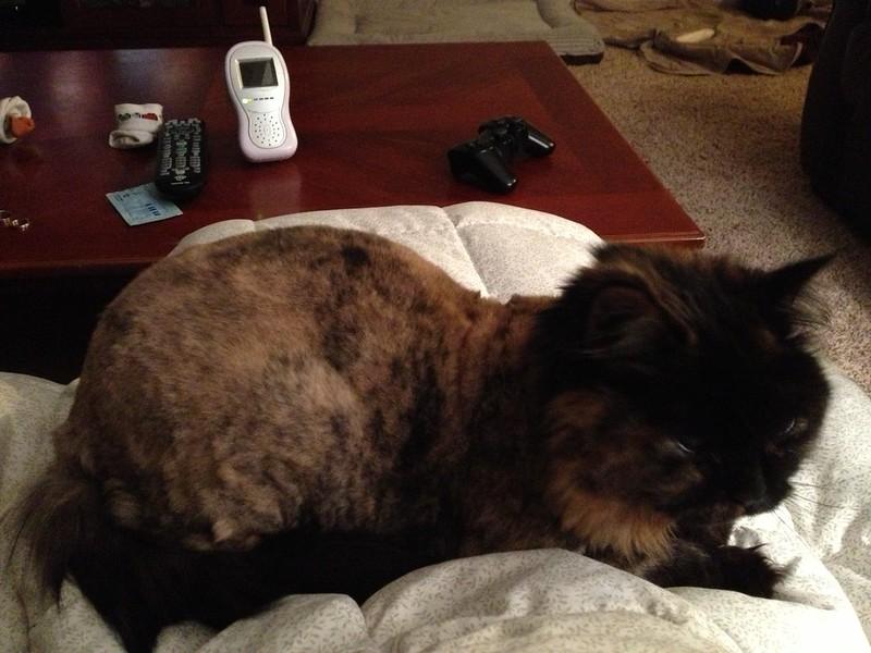 300 lap cat
