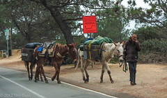 vehicle(0.0), trail riding(0.0), horse(0.0), horse and buggy(0.0), carriage(0.0), mule(1.0), mare(1.0), pack animal(1.0), horse harness(1.0),