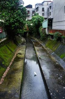 東區街道殘存的柳公圳支流,雖然看起來像臭水溝,卻有小白鷺前來覓食。