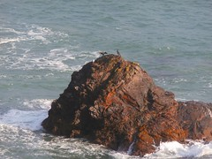 sea, ocean, headland, body of water, wind wave, wave, terrain, stack, islet, rock, cliff,
