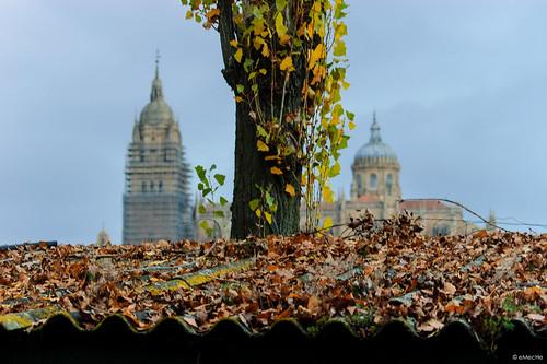 variaciones sobre el mismo tema - paseando por el otoño sin ira by eMecHe