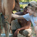 Learning to Milk a Cow at Morgan's Rock Farm - Pacific Coast, Nicaragua