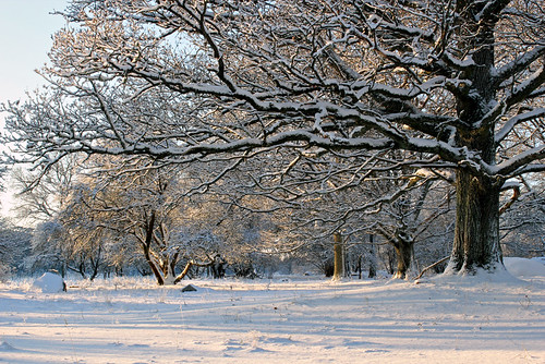 wood trees winter white inspiration snow cold color tree art nature colors beautiful beauty weather composition digital forest canon woodland season landscape eos oak scenery europe flickr frost december quiet afternoon silent seasons view sweden earth scenic frosty best arctic foliage explore views imagination sverige 1855mm 1855 oaks 2012 arboga västmanland explored 550d kungsör decidous vastmanland valskog timlindstedt reutersberg