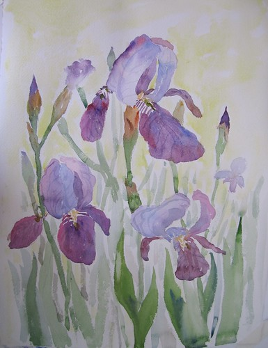 56 Irises by luv2draw