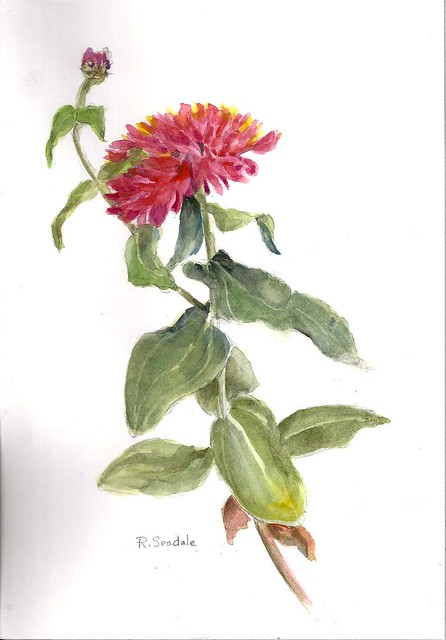 Zinnia. Painting by Rosalind Seadale, 2012. BBG Class: Introduction to Watercolor Painting.