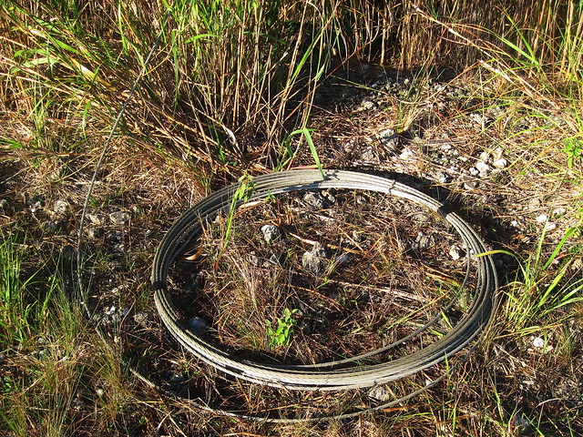 The bird wire neatly rolled up 20121219
