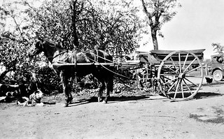 1930 - Dog with horse & cart at Temple Court, Wodonga West, Victoria, Australia