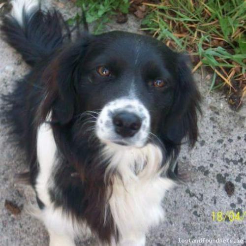 [Reunited] Mon, Sep 19th, 2016 Lost Female Dog - St Brigids Tce, Oldcastle, Meath