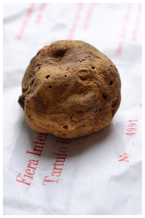 white truffle© by Haalo
