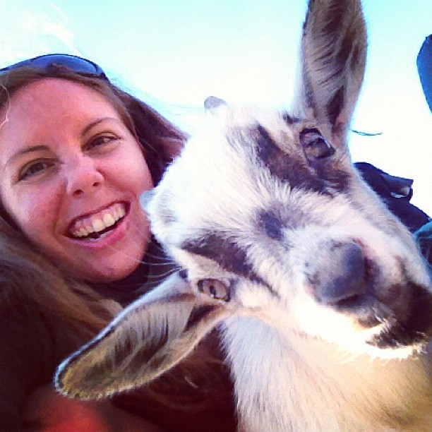 So I might need a pet goat. 'Cause ADORABLE.