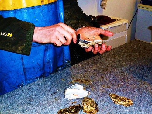 Preparing Fresh Oysters, Isle of Skye