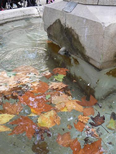 feuilles dans la fontaine.jpg