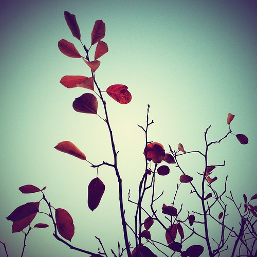 Autumn by scoodog / digging iPhoneography