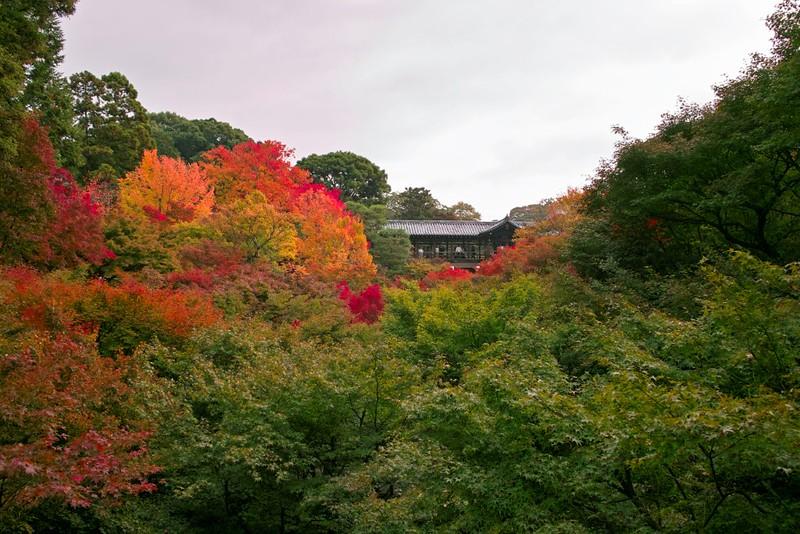 東福寺 #9