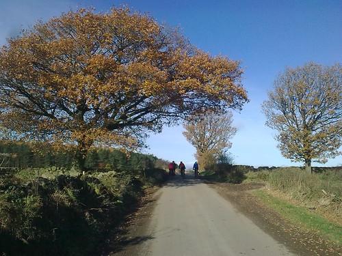 Yorkshire Dales Lanes, near Brimham
