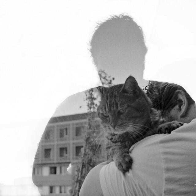 Passion intérieure : le chat