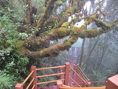 Meie tee vihmametsas by elviina