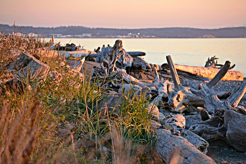 camping sunset sea seagulls beach water birds washington rocks driftwood whidbeyisland pacificnorthwest sanjuanislands 50 saltwater seabirds lopezisland straitofjuandefuca deceptionpassstatepark rosariostrait whidbeyislandnavalairstation