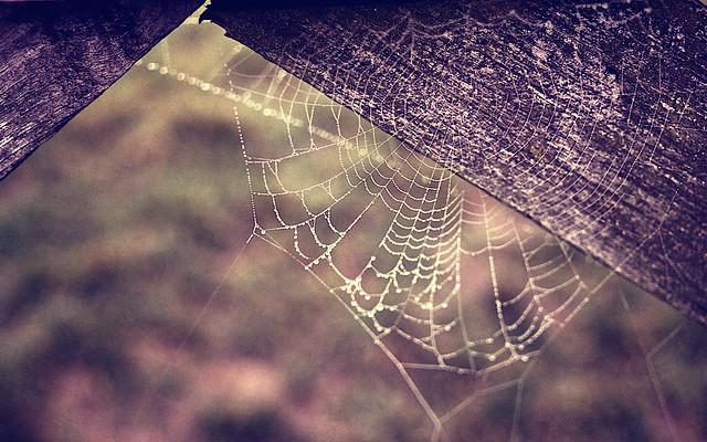Web Holes