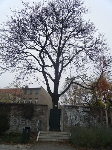 hirschbaum