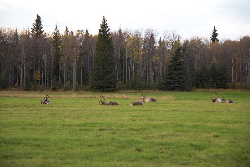 Alaskan Wildlife 15