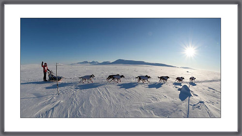Femundlopet sled dog racing photo, helmut-dietz-my-best-shot-2012