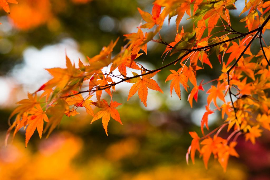 Kyoto-shi, Kyoto Prefecture, Japan, 0.005 sec (1/200), f/4.0, 85 mm, EF85mm f/1.8 USM