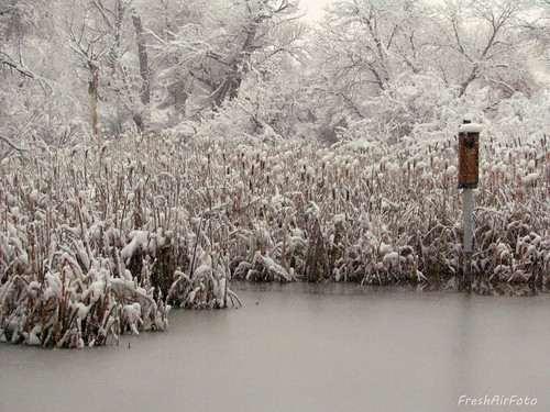 trees winter snow ice nature landscape pond buffalo birdhouse scene cattails wyoming