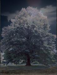 <strong>AZIZ + CUCHER - </strong> Scenapse #10 (Berkshire Nocturne)<br />Aziz + Cucher, Scenapse #10 (Berkshire Nocturne), c-print on Endura Metallic paper with diasec mount, 129 cm x 181 cm, 2011