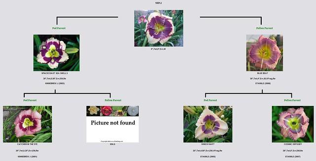 Guide et questions sur l'hybridation des hémérocalles 8235476672_b7416154a5_z
