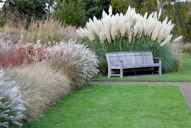 Landscaping ideas with pampas grass pdf for Landscaping ideas with pampas grass