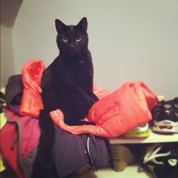 Gibs likes my new running vest.