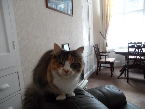 2012-12-05 Hull cat