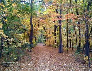 10 October - Hidden Hollow Park, White Bear Lake, Minnesota