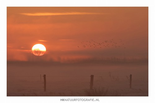 morning light mist cold netherlands colors fog sunrise licht foggy nederland ochtend uden noordbrabant koud zonsopkomst lapwings kievieten maashorst hknatuurfotografienl leijgraaf hanskoster