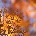 Autumn Leaves with Golden Background by Apricot Cafe