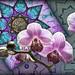 Orchid Fun by skagitrenee