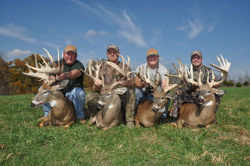 2012 Whitetail Deer