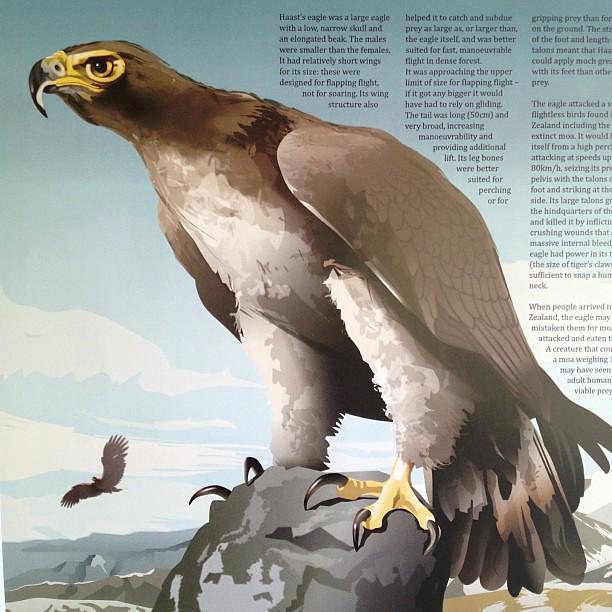 Haast Eagle Compared To Human
