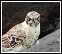 Galapagos flora and fauna