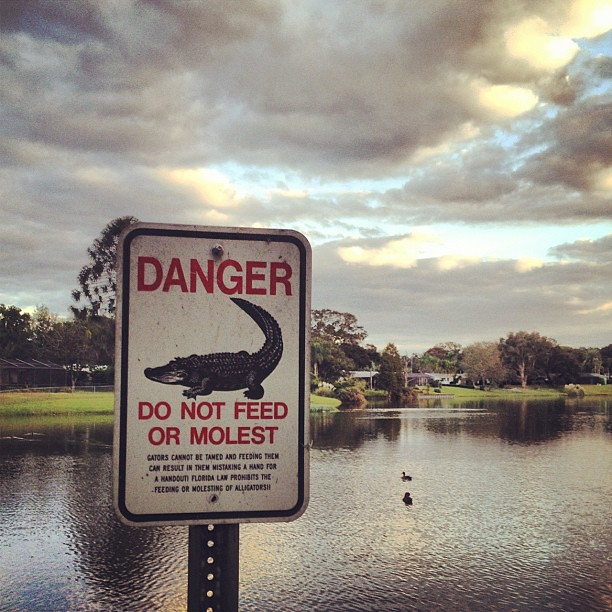 Alligator molesters beware.