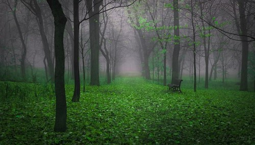 nature montagne vert arbres sentier couleur banc forêt feuillemorte éternité dreamforest arborealdreams viragedecouleur
