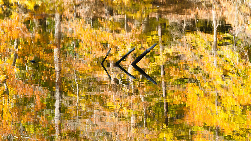Fall Color Reflected