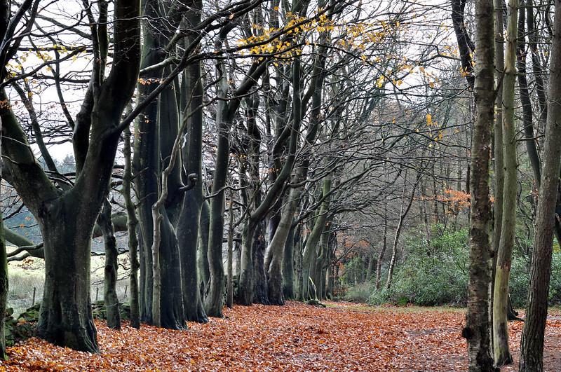darwin forest 36