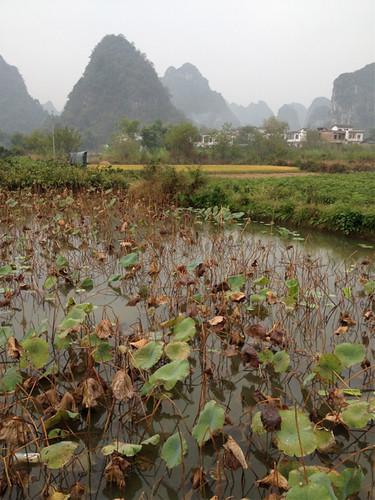 Farm near Yangshuo, Guangxi