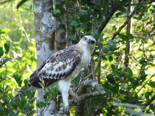Imagen del Yala National Park (Sri Lanka)